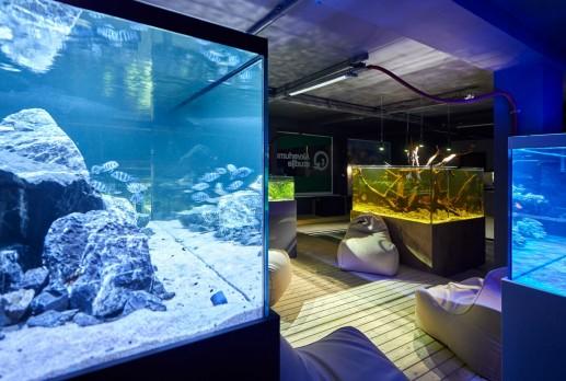 16-Tomas-Lape-Akvariumu-studija-©Norbert-Tukaj-3695